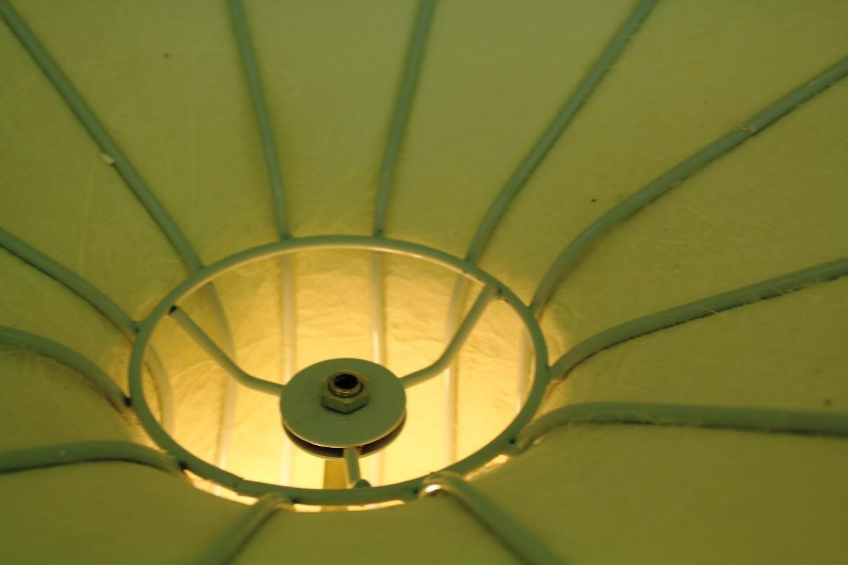 _morning_glory_lamp_delightful_su_23