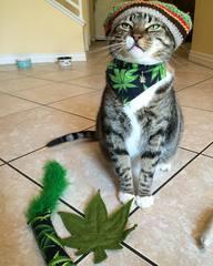 Кот во весь рост