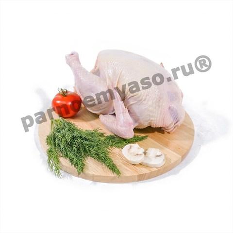 Цыпленок домашний