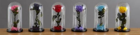 Долговечная Живая роза в стеклянной колбе - замечательный подарок д...