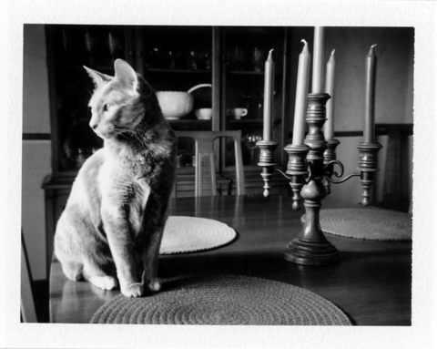 Elegant Kitty (Brock Royston)