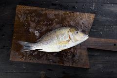 Императорская рыба выпотрошенная дикий промысел