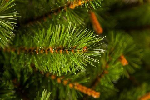 Искусственная сосна Сказочная 90 см зелёная в мешочке