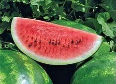 Арашан F1 семена арбуза, (Syng.)