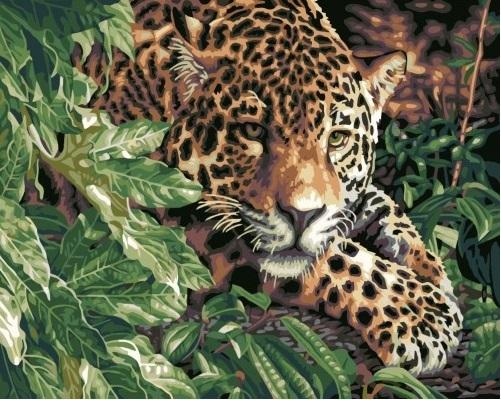 Картина раскраска по номерам 40x50 Тигрица выглядывает из ...