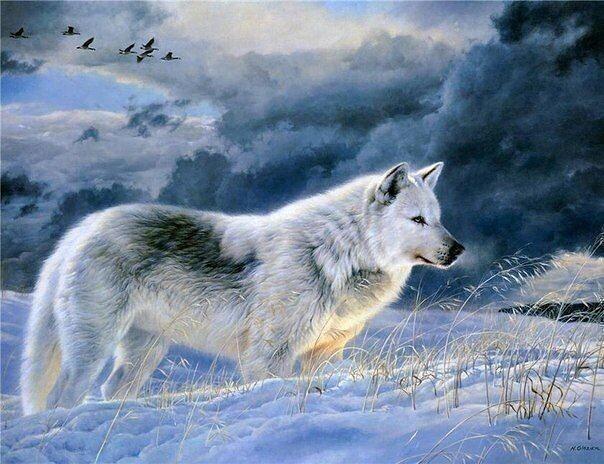 Картина раскраска по номерам 40x50 Волк в лесу зимой (арт ...