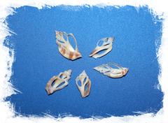 Морские ракушки для поделок, украшений