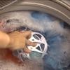 Контейнер Bra Baby (Бра Беби) для стирки бюстгальтера в стиральной ...