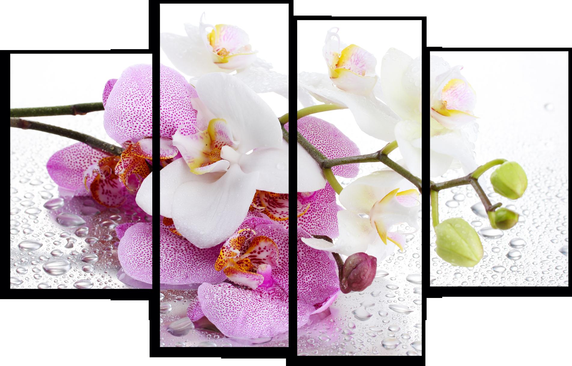 """Цветы Модульная картина """"Мокрая орхидея"""" М746.png"""