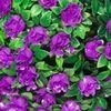 Светильник садово-парковый на солнечной батарее «Цветочный шар», фиолетовый, 20 LED (белый), D 28 см E5209 (Feron)