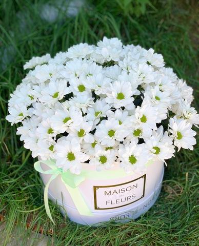 Белые хризантемы в подарочной коробке