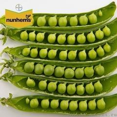 Женева семена гороха (Nunhems / Нюнемс)