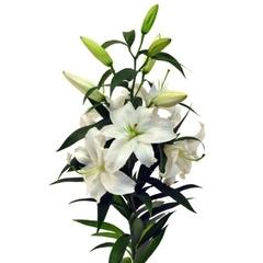Лилия белая (ветка)