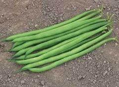 Серенгети семена фасоли, (Syng.)
