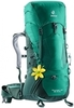 2231 alpinegreen-forest