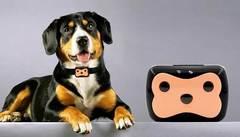 GPS ошейник для животных Pet Gps Tracker