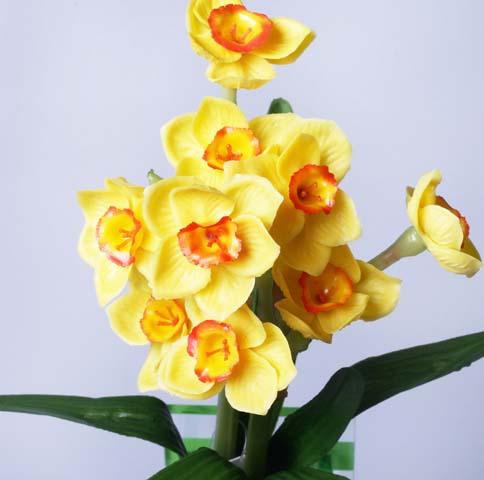 Нарциссы желтые 6-232