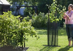 Защита молодых деревьев КЕККИЛА