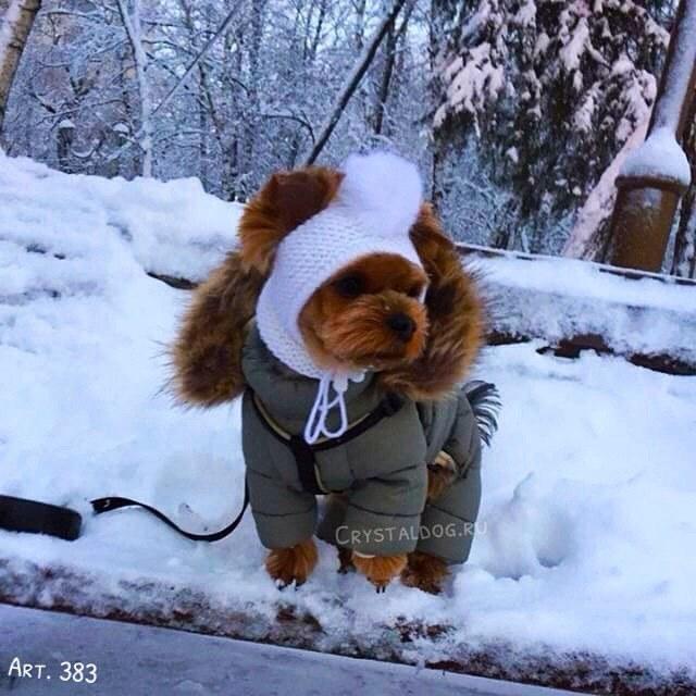 зимний комбинезон для йорка puppyangel