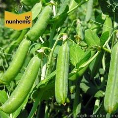 Асана семена гороха (Nunhems / Нюнемс)