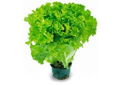 Салат в горшочке, 90г