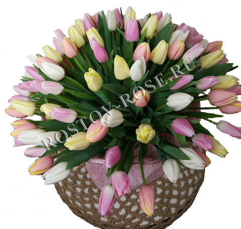 25 Тюльпанов бело-желто-розовый микс