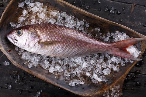 Луциант красный охлажденная Шри-Ланка