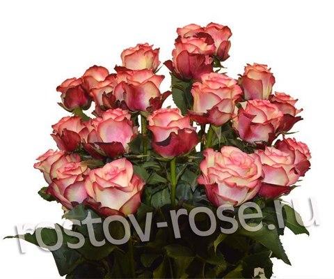 Букет 21 бело-красная роза (Зквадор)