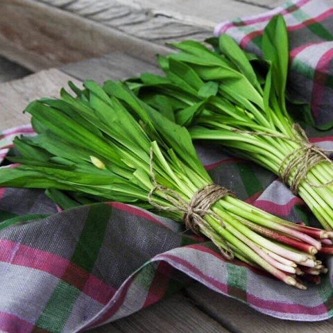 Фотография Черемша свежая (листья) / 250 гр купить в магазине Афлора