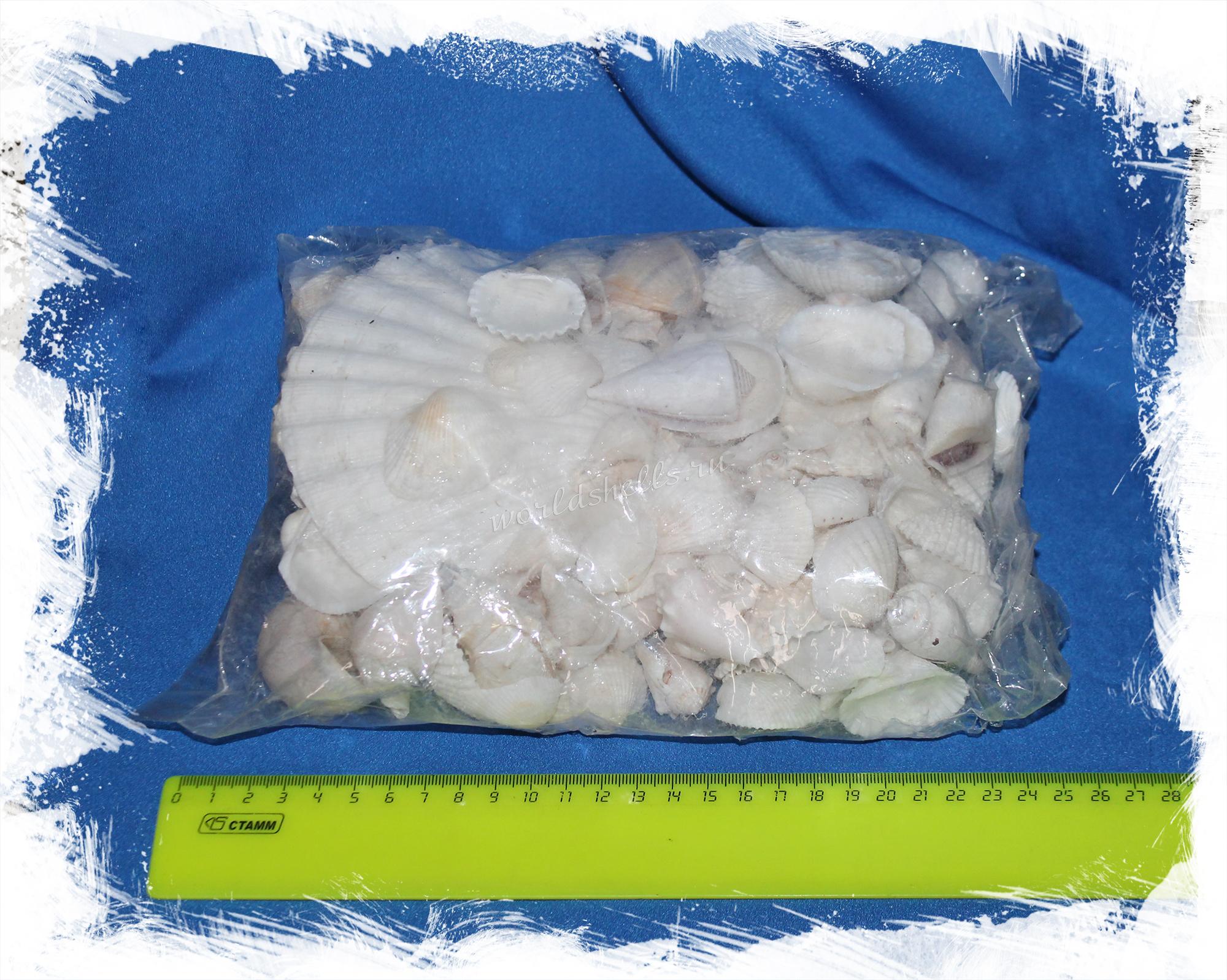 Купить морские ракушки для декора в морском стиле