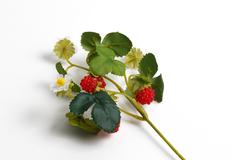 Ветка земляники с ягодами и цветками.