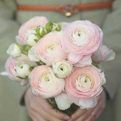 Букет из ранункулюсов 9 шт. нежно-розовых