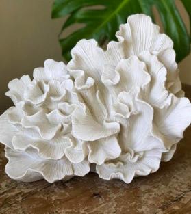 Волнистый коралл (Wave Coral), большой