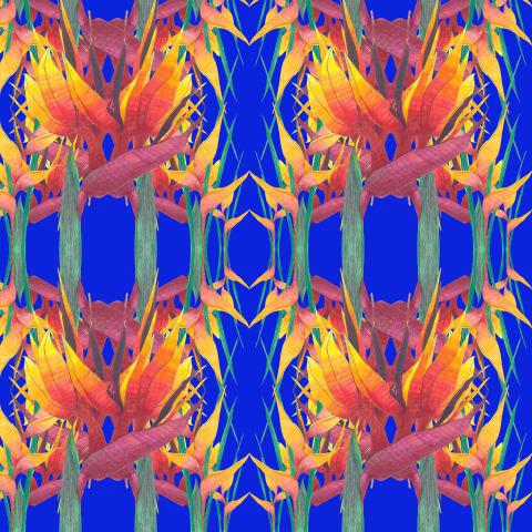 Стрелиция 2 (blue)