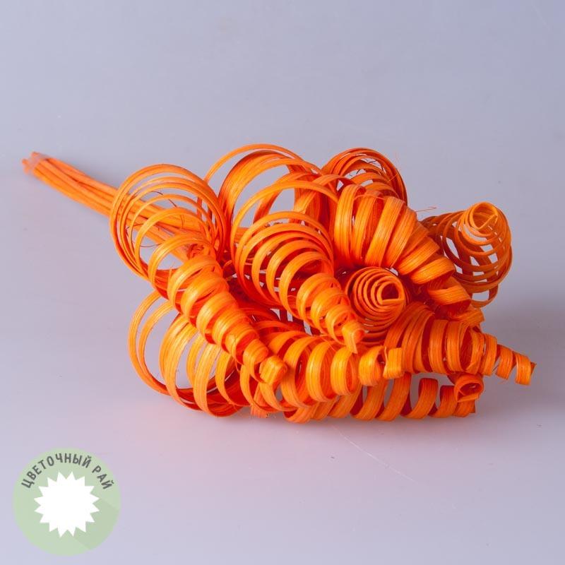Сухоцветы.Конус прямой оранжевый 10 шт.