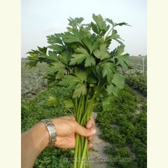 Итальянский гигант новас семена петрушки, (Clause / Клос)