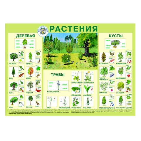 Плакат Растения (Мир вокруг нас)