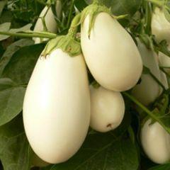 Бибо F1 семена баклажана, (Seminis / Семинис)