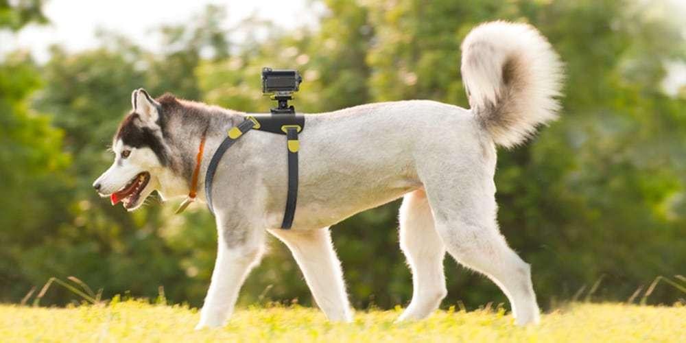 Регулируемый ремень Sony AKA-DM1 на собаке