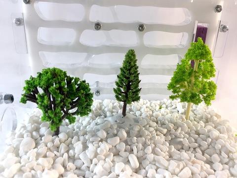 дерево1
