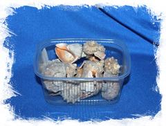 Декоративные ракушки Рапана