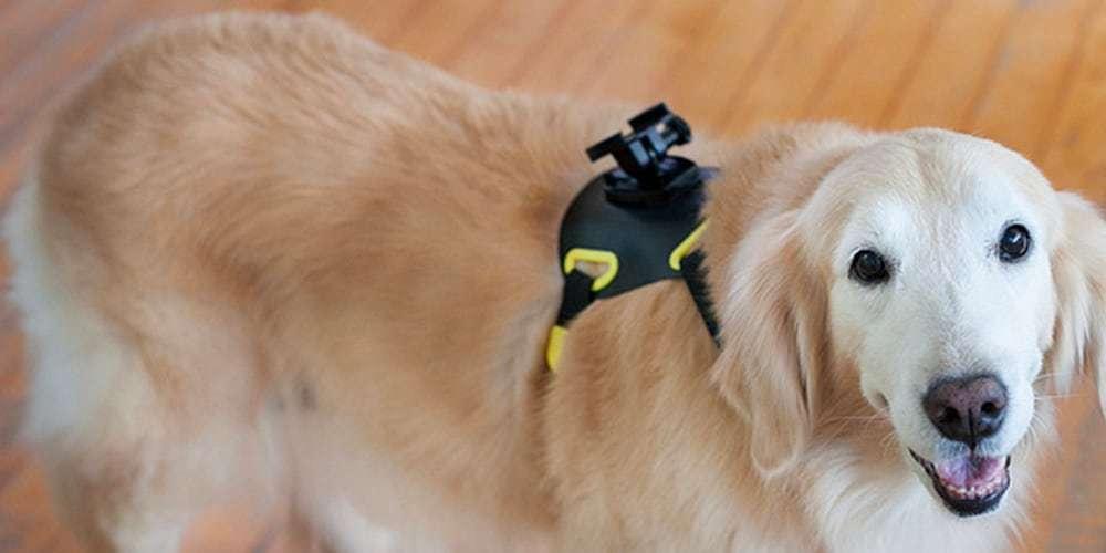 Регулируемый ремень Sony AKA-DM1 на собаке без камеры