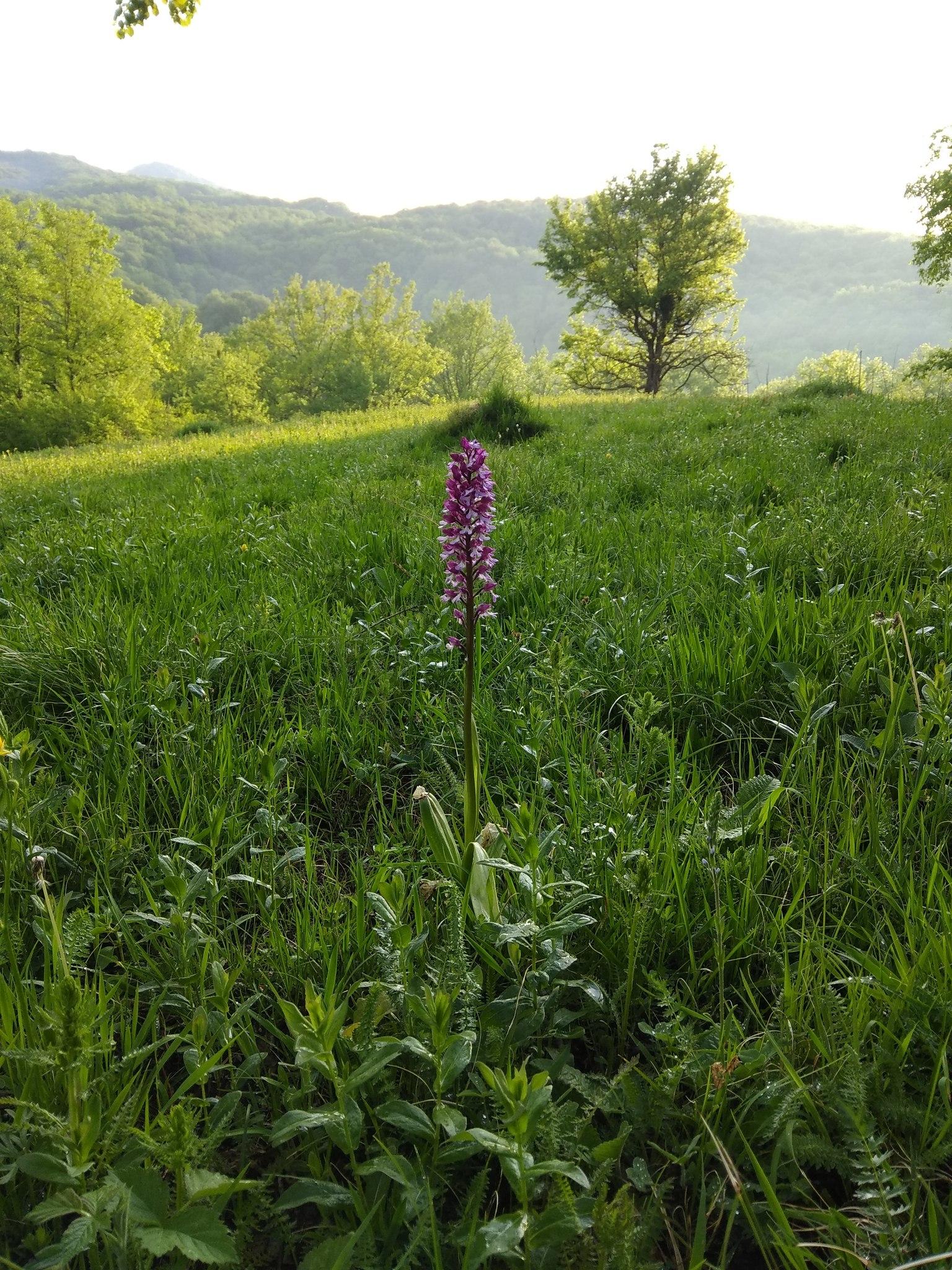 того каждый травы которые растут на лугу фото конева была красавицей