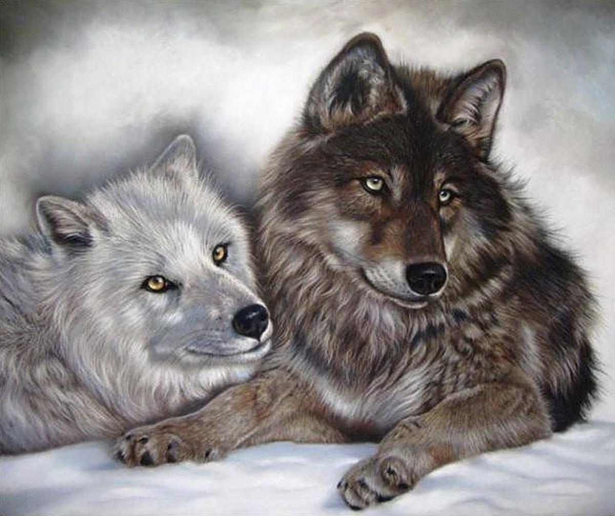 Картина раскраска по номерам 30x40 Темный волк со светлой ...