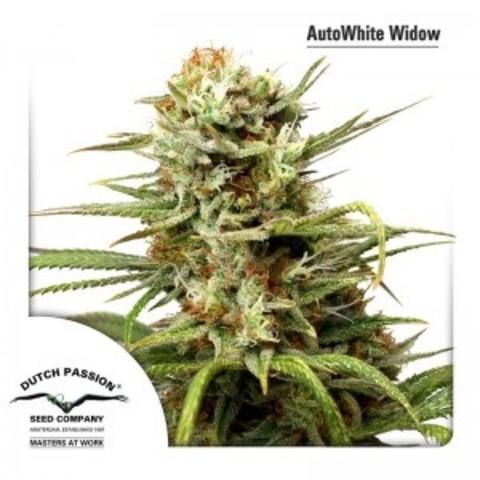 Auto White Widow fem