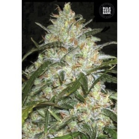 Grape fruit Fem