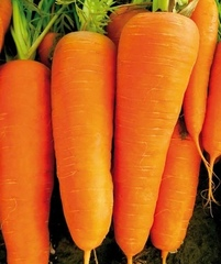 Семена моркови СВ 7381 ДЧ F1, (Seminis / Семинис)