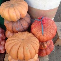 Мускатная прованская семена тыквы, (Clause / Клос)