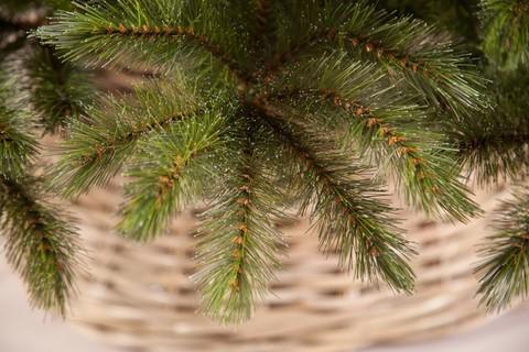 Искусственная елка Лесная Красавица 155 см зеленая