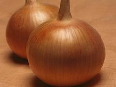 Бонус F1 семена лука репчатого, (Takii / Таки)